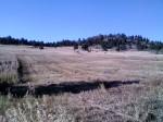 Haystack Weed Plot