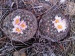 Early blooms in GVM, E. Heath 3/22/09